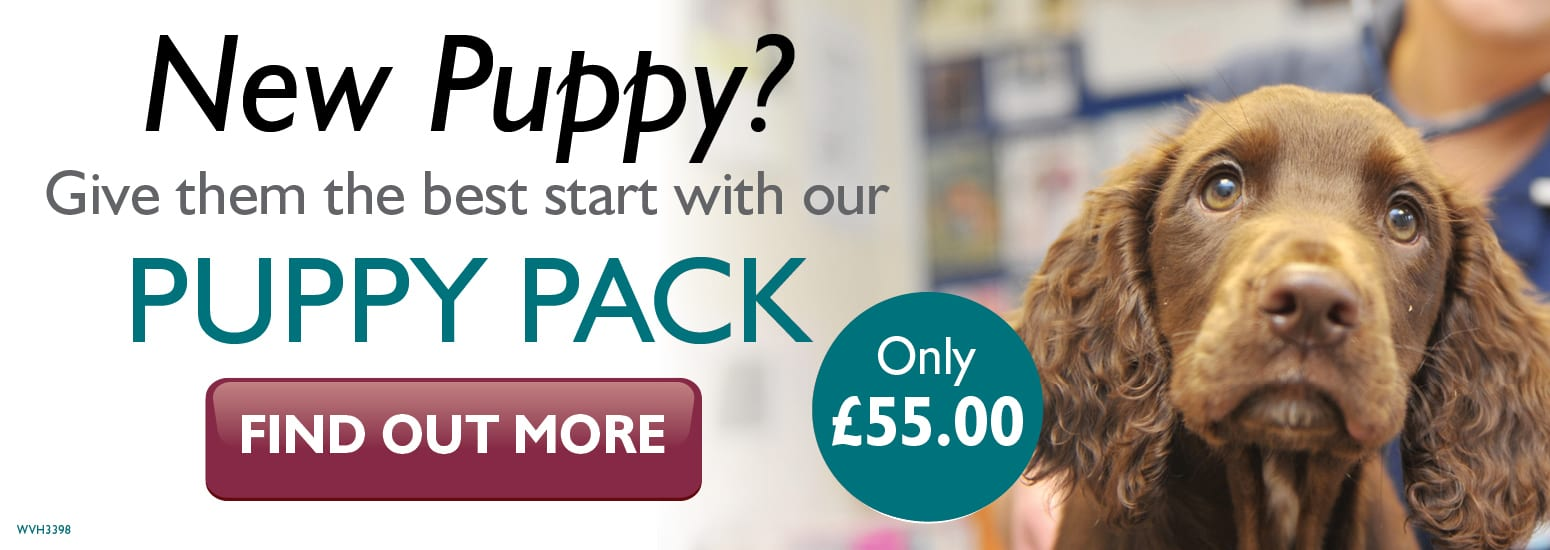 Puppy Pack covering puppy injections, flea & worm treatment, and much more for only £55 at vets in Tarvin