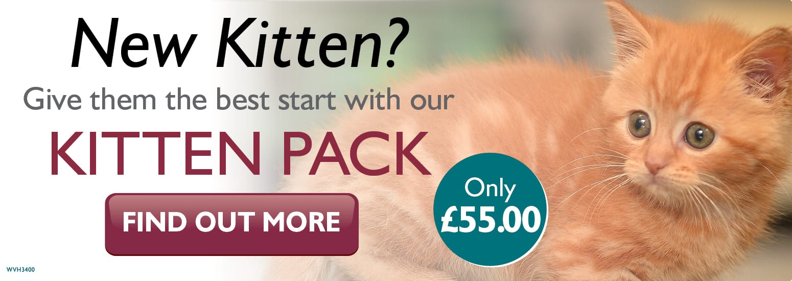 Kitten Pack covering kitten injections, flea & worm treatment, and much more for only £55 at vets in Tarvin